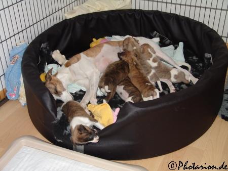 kopetes Puppies 3 Wochen alt